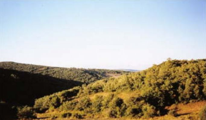 https://www.navamuel.com/images/Vistas/Bosques.jpg